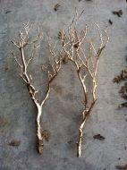 Gold Branches